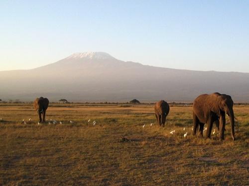 アフリカ大陸最高峰・キリマンジャロ
