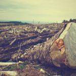 環境破壊・環境問題ドキュメンタリ-のイメージ画像