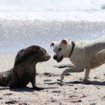 動物番組や動物バラエティのイメージ画像