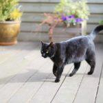 ネコ、黒猫のイメージ