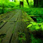 森林のイメージ